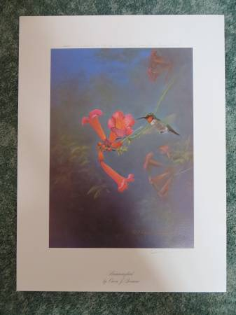 Photo Hummingbird by Owen Gromme Print Signed - $200