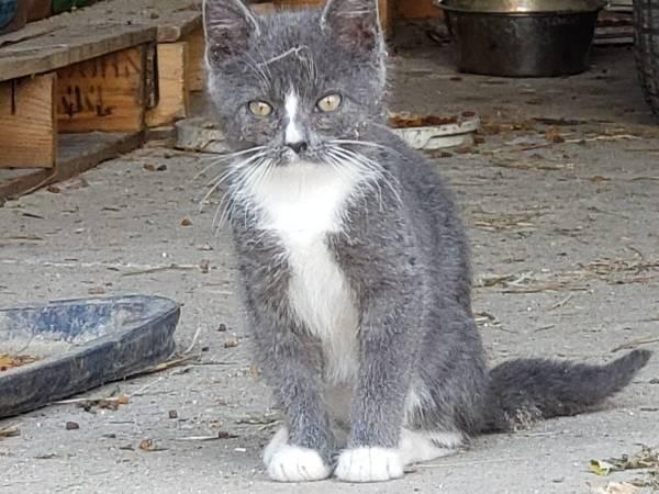 Photo Kittens - farm raised looking for new homes (Deerfield)