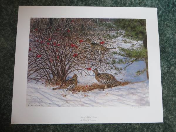 Photo Trio of Ruffed Grouse by Owen Gromme Print Signed  Numbered - $175