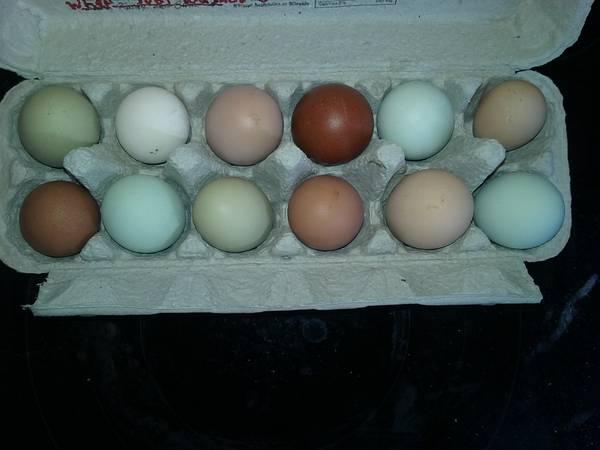 Photo Egg Cartons  New  - $10 (Crescent City)