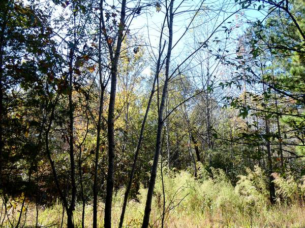 Photo Beautiful Multi-Parcel Property Is Perfect For The Nature Lover (Middleton)