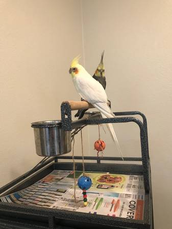 Photo Birds with cage for sale - $440 (Livingston)