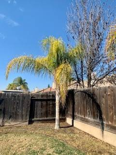 Photo Palm Trees For Sale (5) (Merced Ca)