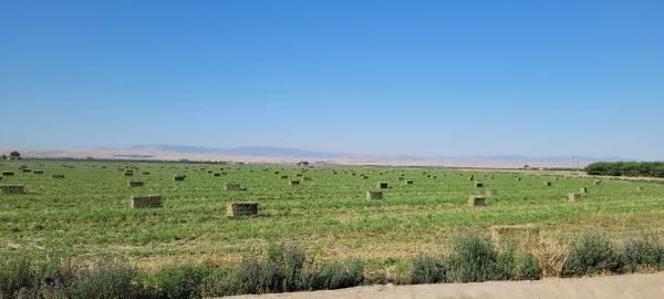 Photo alfalfa hay - $16 (Los Banos)