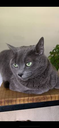Photo Cat free to good home (Roth myrtle beach)