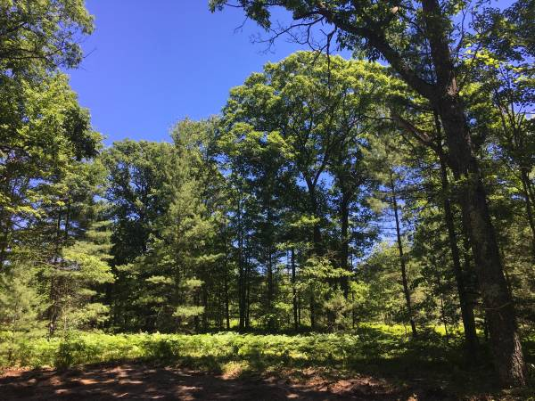 Photo New on the Market Wooded 5 Acres off Supply Road, Borders State Land (Traverse City)