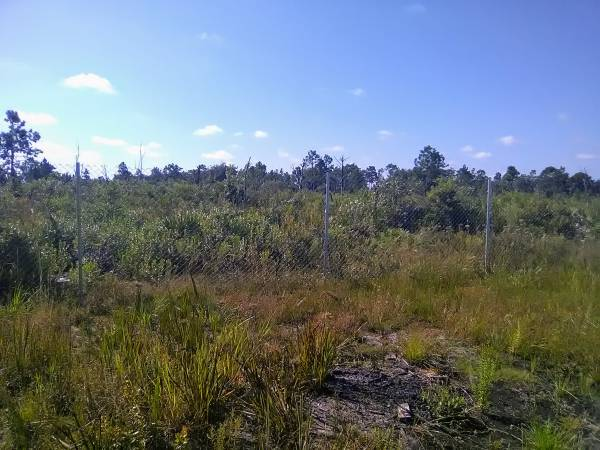 Photo 1.25 acres Very Private  Close to Beach (ST CLOUD)