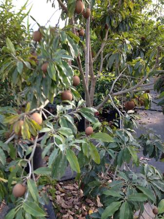 Exotic Fruit Tree For 23710 69th