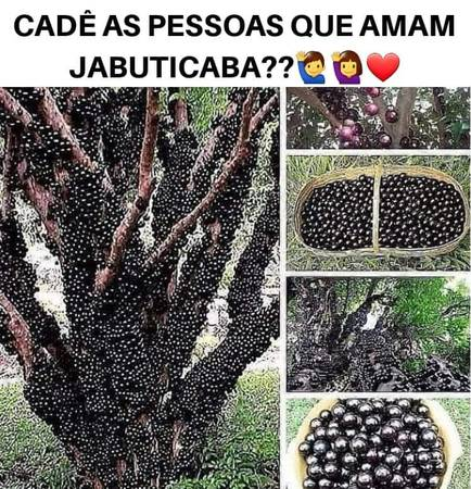 Photo JABOTICABA FRUIT TREES  Many Other FRUIT TREES Available  BAMBOO Too - $40 (17229 Phil C Peters Rd., Winter Garden, Fl.)