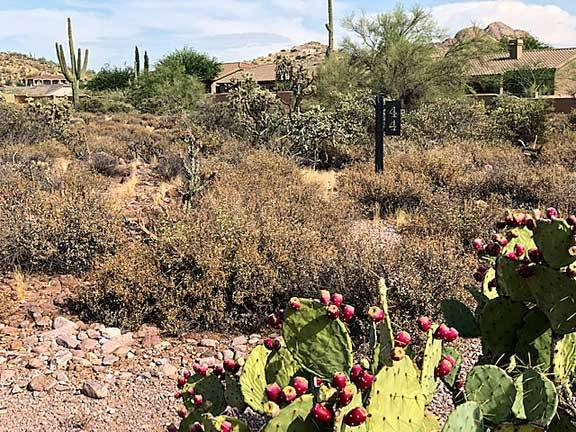 Photo LOT FOR SALE EXCELLENT LOCATIONSELLER FINANCING AVAILABLE (Superstition Mountain Golf and Country Club - Gold Canyon)