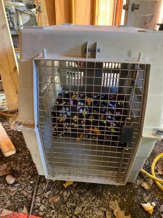 Photo Dog cage, crate, IGLOO (East Stroudsburg)