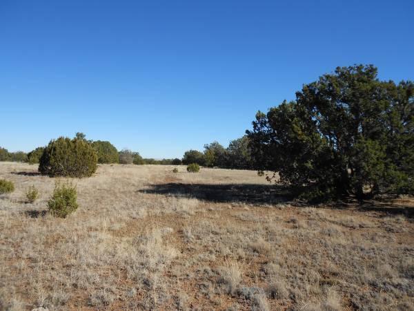 Photo 1.26 acres of new territory under the shade of evergreen trees (prescott)