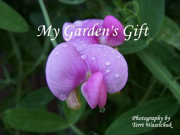 Photo Craft sale My Garden39s Gift Photography - $12,345 (Racine)