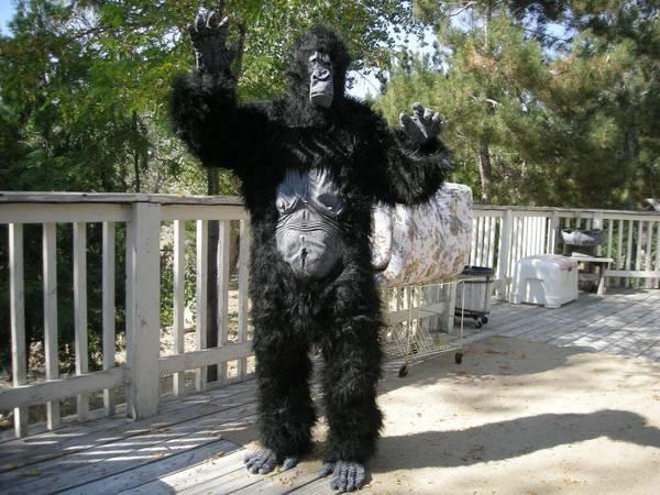 Photo Halloween Costume Gorilla Suit Monkey Ape Gorila suite Gorila NEW  - $50 (Reno Red Rock Rancho Haven)