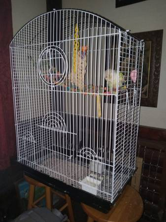 Photo Birds for sale - $700 (North chesterfield)