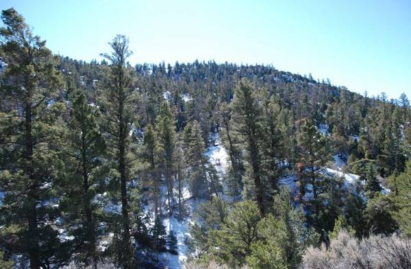 Photo ---5.5 Acres in the CO Mountains HUGE PINE TREES ON THIS PROPERTY (the Sangre de Cristo Mountain range)
