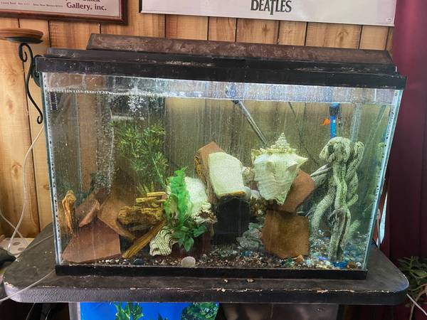 Photo free 45 gallon aquarium and or free cichilds (salida,howard)