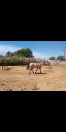 Photo 4-horse walker - $1,500 (Carlsbad)