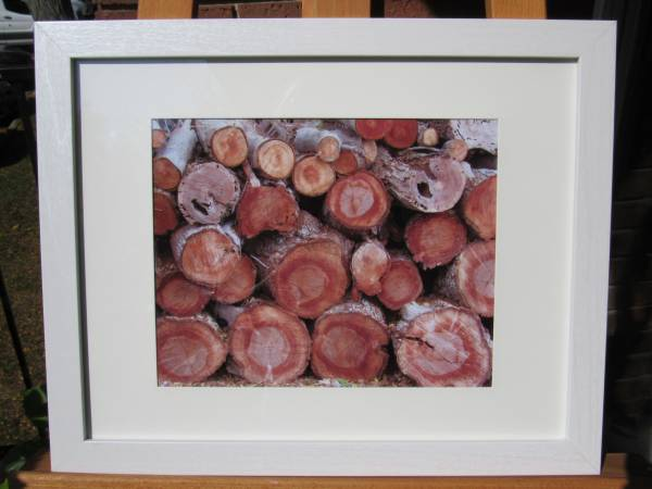 Photo New Framed Art Photograph 15 58 inches x 12 58 inches - $25 (Ann Arbor)