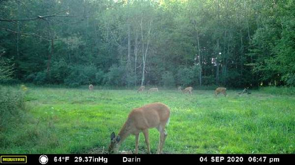 Photo YOUTH HUNT (ANTLERLESS ONLY) - $300 (MIDLAND COUNTY) - $300 (MIDLAND COUNTY)