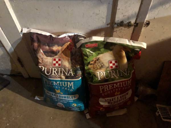Photo Chickens- Hens Shavings Adult And Baby Feed And and Female Chicks - $15 (La Mesa)