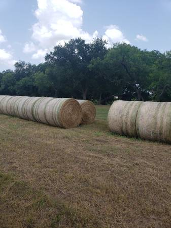 Photo Coastal Hay - 4x5 Bales - Pricing dependent on quality - $50 (San Marcos)