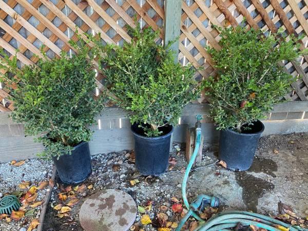 Photo Box Wood Plants 5 gallon - $45 (Goleta)
