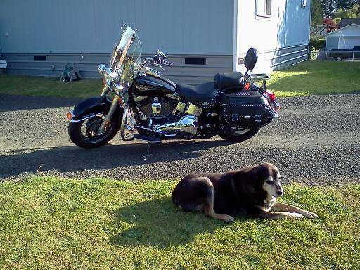 Photo 2006 Harley Davidson Heritage Classic, Excellent Condition - $9,500 (McCleary)