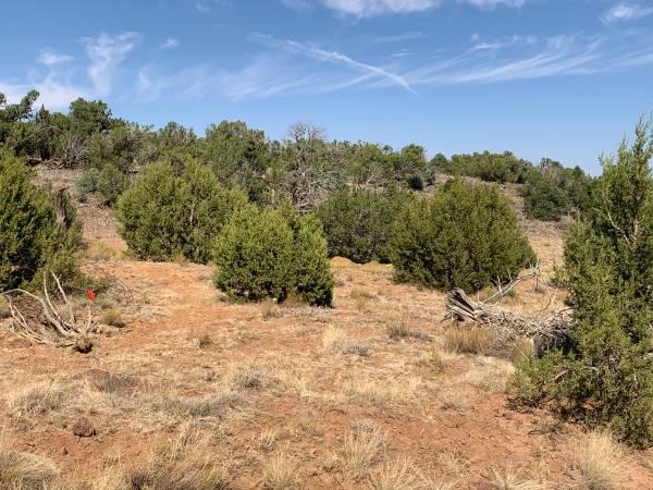 Photo 1.03 Acres For sale in White Mountain Paradise 107-29-244 (Vernon)