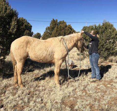 Photo Horse for sale - $4000 (Showlow)