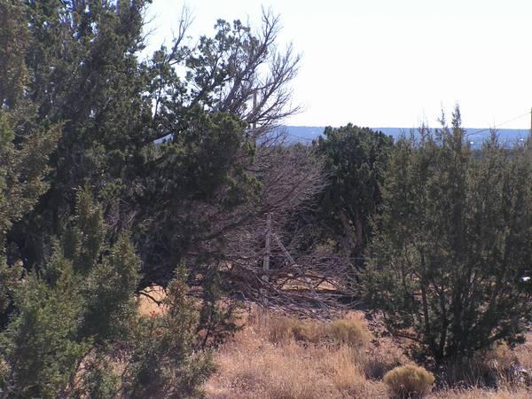 Photo White Mountain Property (Taylor, AZ)