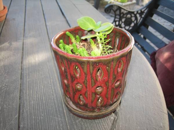 Photo Succulents Potted Ceramic Clay Pots - $5 (San Luis Obispo)