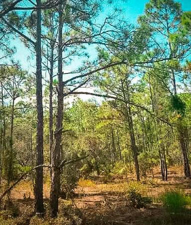 Photo Lakes Galore $50DOWN  Acre of PROPERTY in Florida