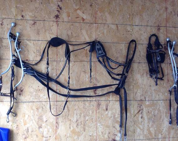 Photo Welsh size harness and bridles - $100 (Rice)