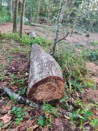 Photo Free Oak Log  Firewood (Tallahassee Eastside)