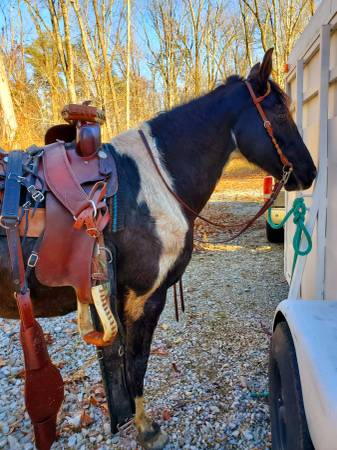 Photo 11y.o black pinto gaited mare - $3,800 (Terre haute)
