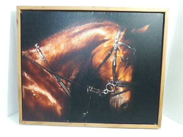 Photo Beautiful Horse print on canvas 22 inch x 18 inch - $20 (FriscoLittle Elm)