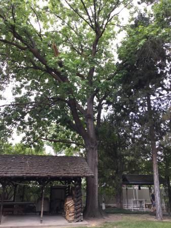 Photo Free Oak Tree You Take IT Down (boise)
