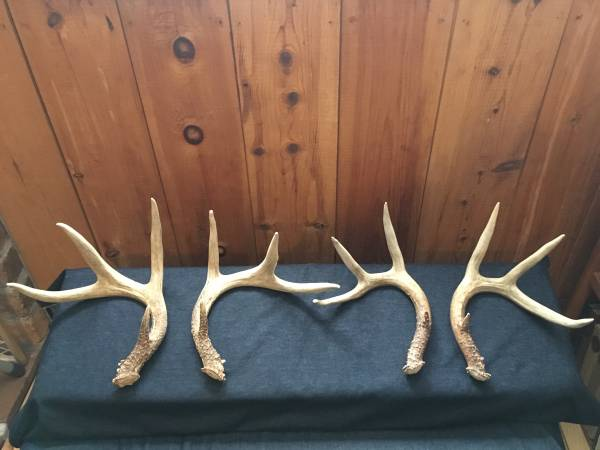 Photo Antlers, Whitetail Deer, Two Pairs - $60 (Curtis area)