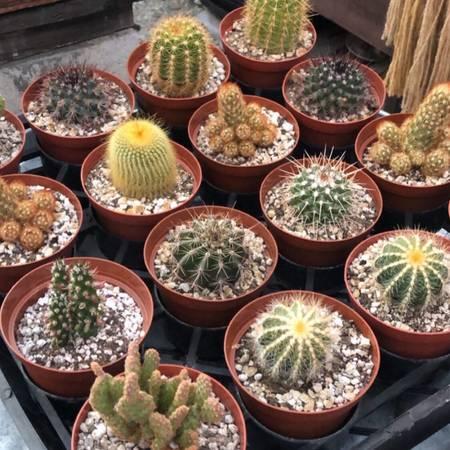 Photo SUCCULENTS CACTI PLANTS USED POTTERY EL SERENO (El SERENO, LOS Angeles)