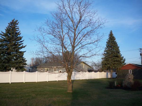 Photo FREE FIREWOOD IN TWO MEDIUM TREES (WATERTOWN NY)