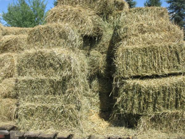 Photo Meadow grass hay for sale in small square bales - $4 (Kronenwetter)
