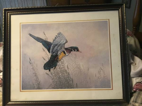 Photo Christopher Forrest Print Of Wood Duck In Flight - $20 (Monsonma)