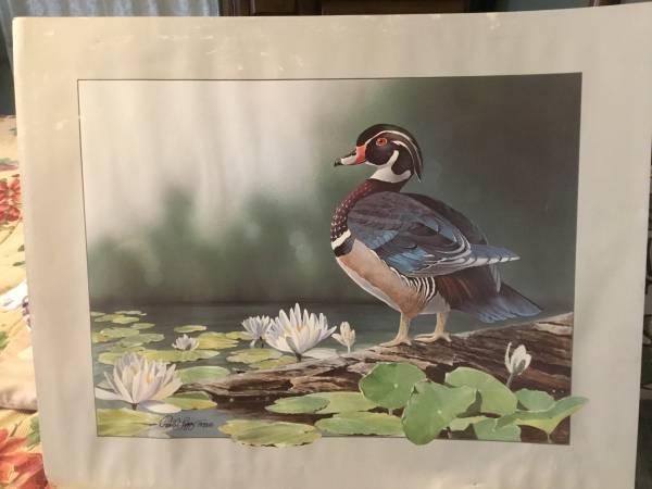 Photo Paul Lopez Print Of Wood Duck 1988 - $20 (Monson,Ma)
