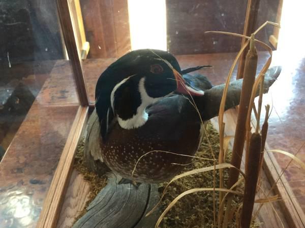 Photo Wood Duck - $125 (Durango)