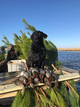 Photo Carolina Skiff Duck Boat - $14,999 (Raleigh)