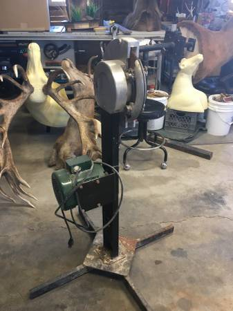 Photo Taxidermy tumbler and Flesher