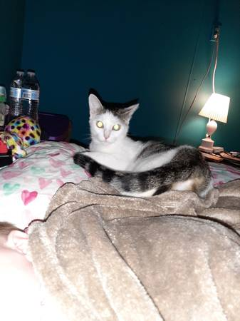 Photo 2 Adult female cats to forever home (Crooksville)